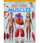 Muscles – How My Body Works